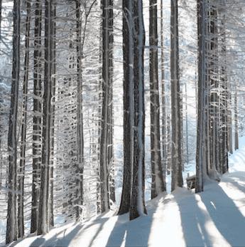 PIano Manufacture Schimmel - Soundboard Wood